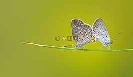 蝴蝶,消光,特写