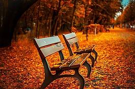 长凳,秋天,公园