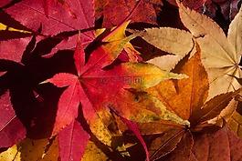 秋季,秋天的落葉,金色的秋天