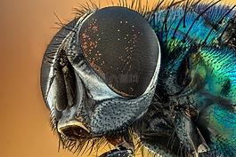 特写,昆虫,绿色