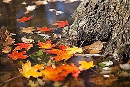 秋,秋天,叶子