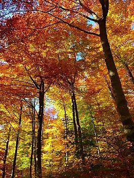 森林,秋季森林,豐富多彩