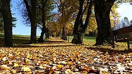 阿尔高,秋季,叶子