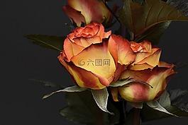 玫瑰,花,花瓣