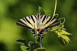 蝴蝶,動物,藝術品