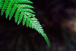 蕨类植物,制动,植物