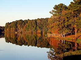 湖,水,樹