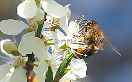 昆虫,厂,性质