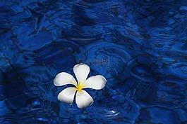 花,水,春天