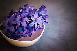 风信子,花,紫