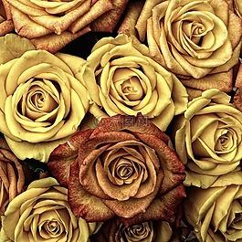 玫瑰,花,愛情