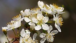 蜜蜂,花卉,春天