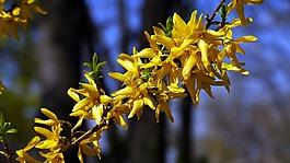 春天,春天的花朵,阳光