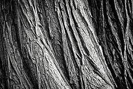 樹,樹樹皮,日志
