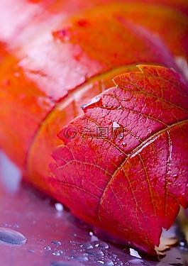 树叶,彩色树叶,红色树叶