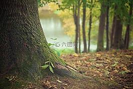 樹干,森林的地面,根