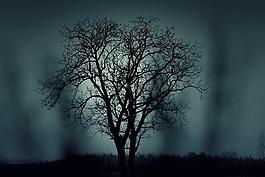 樹,側影,神秘