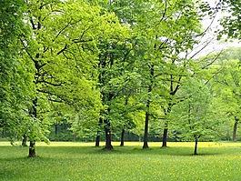 德國,自然,樹
