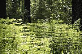 森林,植被,環境