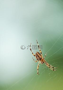 蜘蛛,網絡,性質