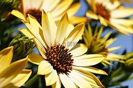 花卉,黃色,春天
