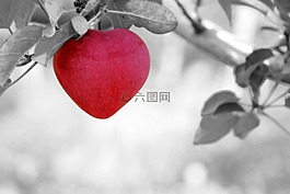 蘋果,愛情,心