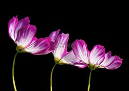 鲜花,夏季,园林植物