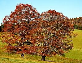 樹木,圖書,落葉樹