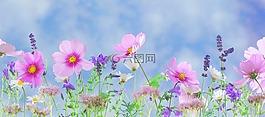 野生花卉,鲜花,植物