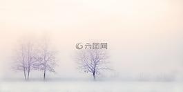 冬季景觀,樹木,雪
