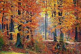 伍茲,森林,自然