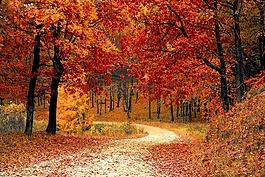 秋天,秋,红色