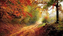 路,森林,季節