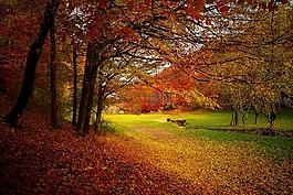 秋,森林,伍茲