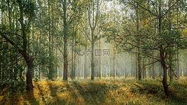 绿色,公园,季节
