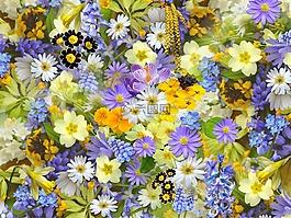 春天的花朵,鲜花,拼贴画