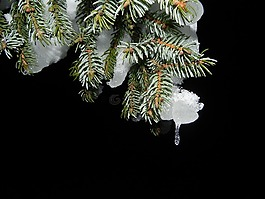 冷杉,雪,夜