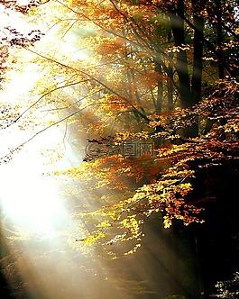 森林,光,秋季