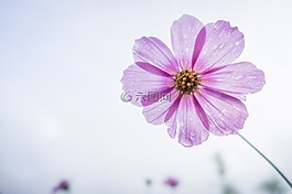 宇宙花,花,花园