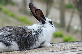 小兔子,兔子,兔