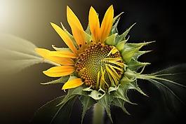 自然,植物区系,花