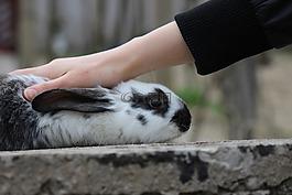 兔子,小兔子,兔