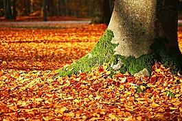 秋天的落叶,苔,树