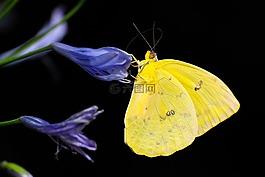 蝴蝶,昆虫,丰富多彩