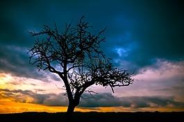 樹,日落,景觀