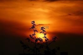 日落,景观,植物