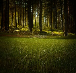 森林,自然,樹