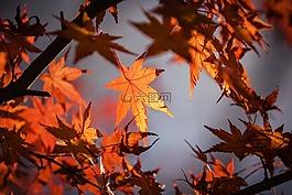 秋假,日本,自然