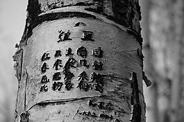 樹,刻,詩歌