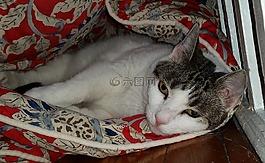 貓,棉被,首頁
